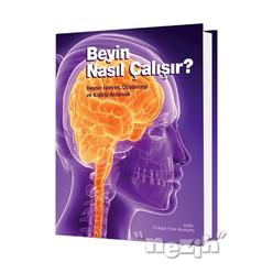 Beyin Nasıl Çalışır? - Thumbnail