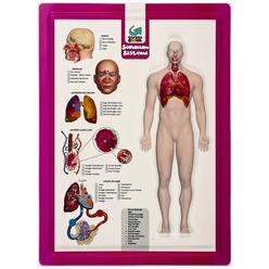 Gürbüz Kabartma Anatomi Atlası A4 28003 - Thumbnail